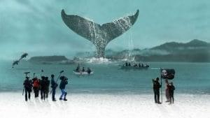 A Whale of a Tale Podcast with Megumi Sasaki Image