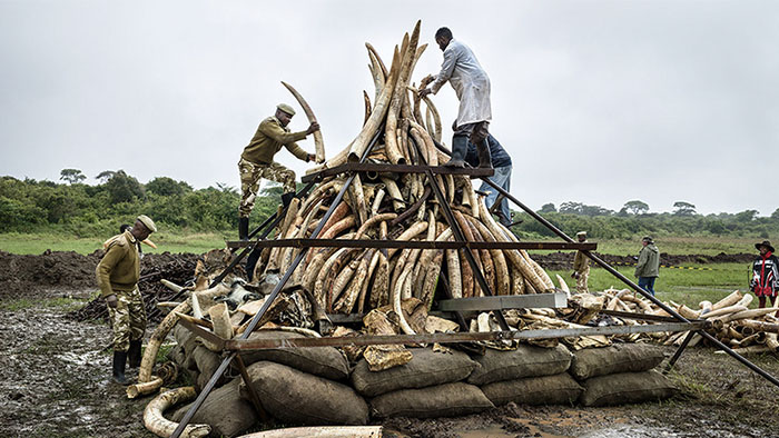 Anthropocene: Ivory Burn Image