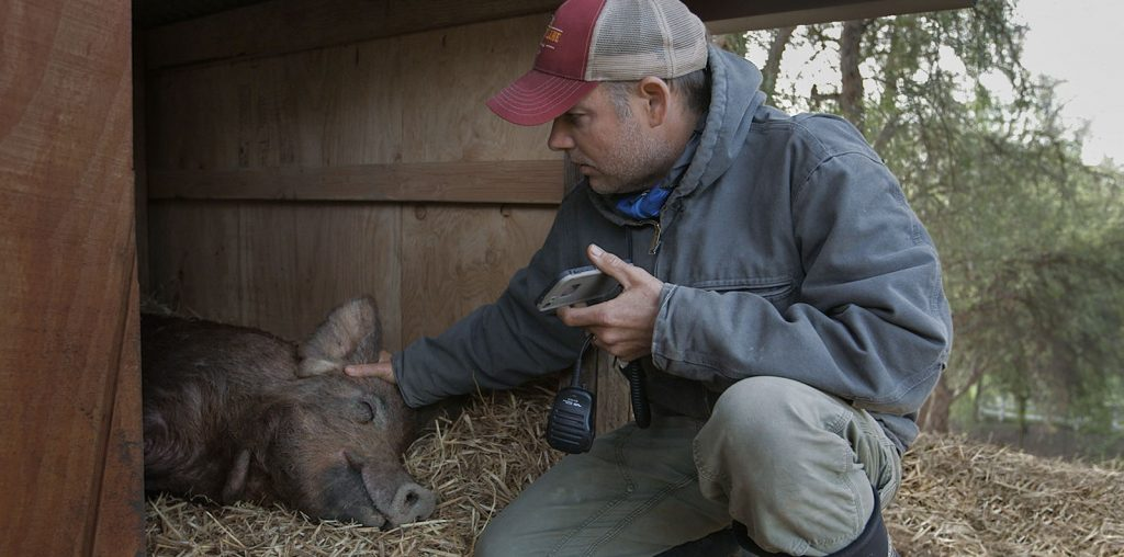 The Biggest Little Farm & the Evolution of Nature Documentaries image