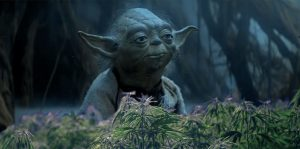 Higher Than Imperial Walker Sn@tch: Pairing Star Wars Weed With Star Wars Movies Image